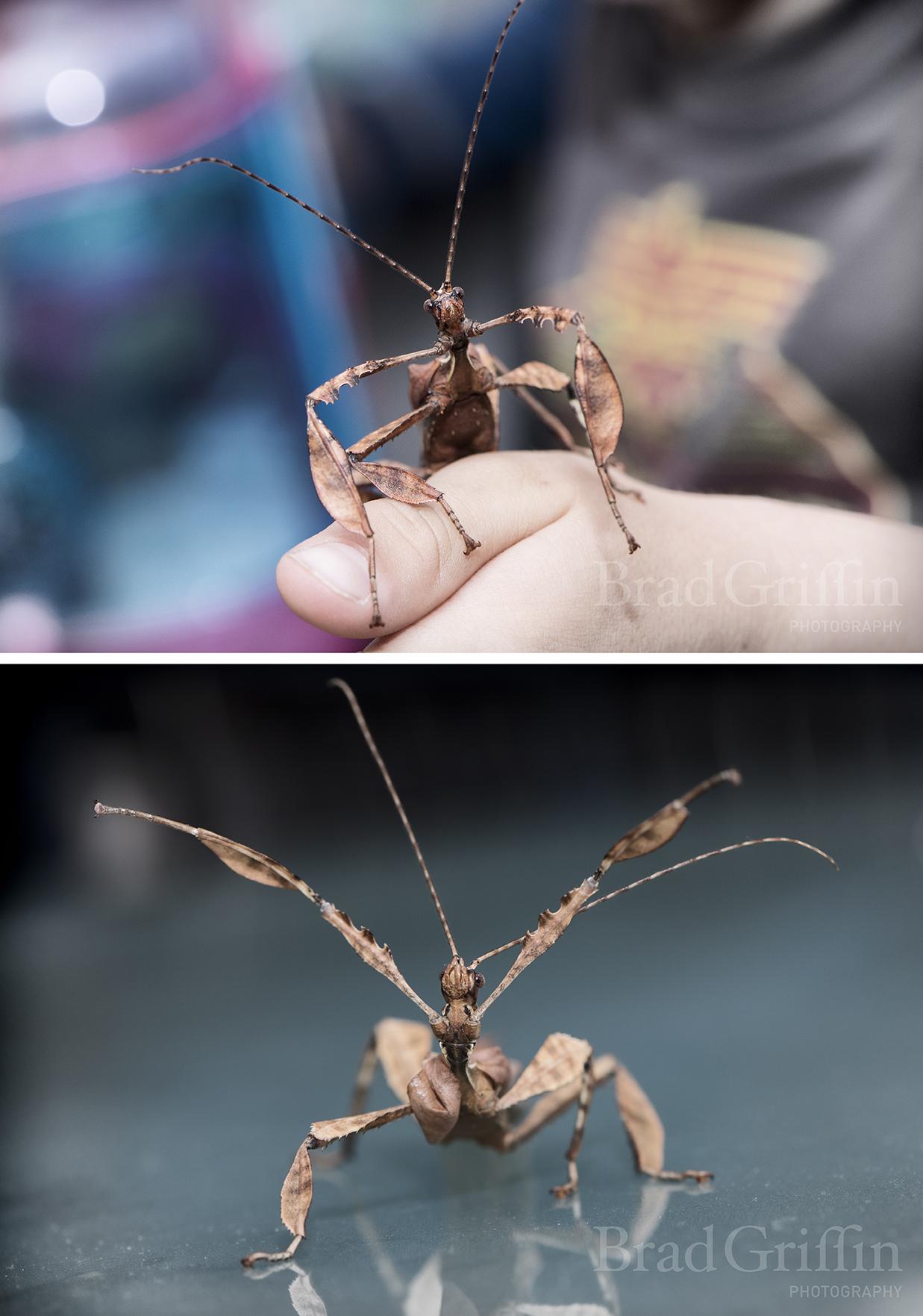 insectblog